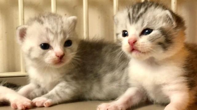 cat,mammal,small to medium sized cats,cat like mammal,whiskers
