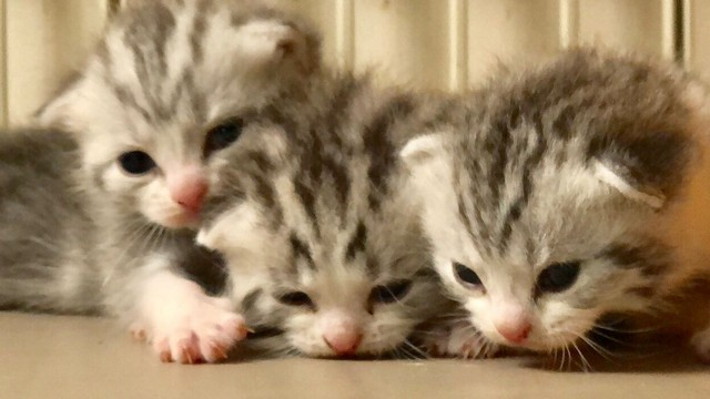 cat,mammal,small to medium sized cats,cat like mammal,kitten