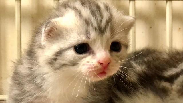 cat,whiskers,small to medium sized cats,cat like mammal,fauna