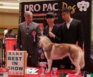 OPAC D か remiuim 港九狗會 BEST IN SHOW,Vertebrate,Dog,Mammal,Canidae,Conformation show