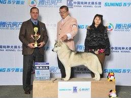 NG 苏宁置豐 赌讯房 腾讯 N纯种犬俱脹 国纯种犬 NG苏宁画 NG霾宁,dog,dog like mammal,mammal,vertebrate,dog breed