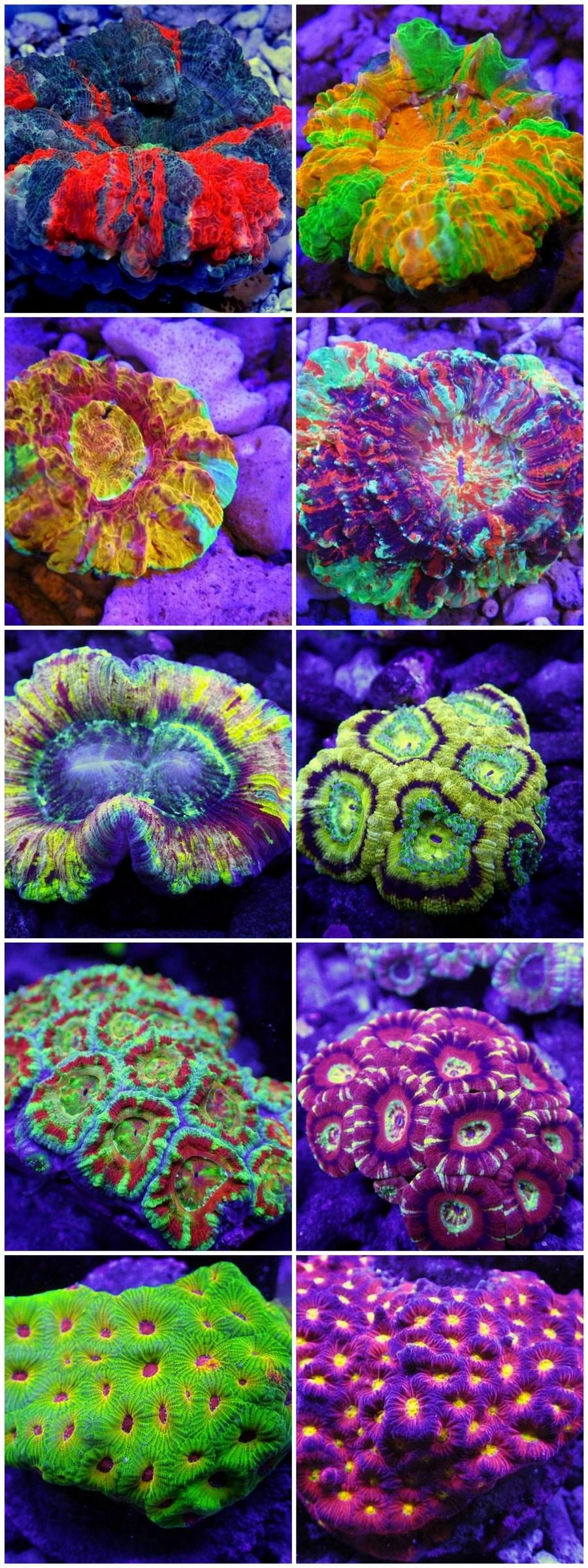 coral reef,coral,stony coral,marine biology,reef