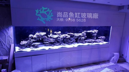 尚品魚缸玻璃廠 大根: 9758 5626,blue,aquarium lighting,purple,reef,aquarium
