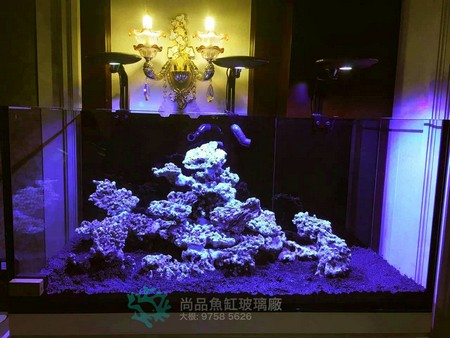 尚品魚缸玻璃廠 : 9758 5626,aquarium lighting,aquarium,reef,freshwater aquarium,lighting