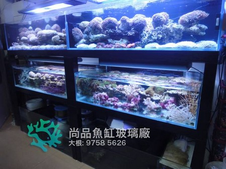 尚品魚 大根: 9758 5626,aquarium,aquarium lighting,reef,coral reef,marine biology