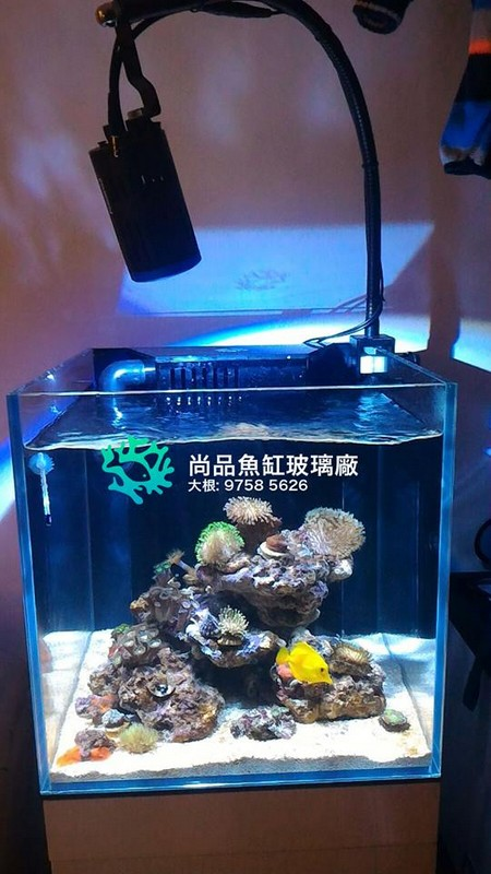 e) 尚品魚缸玻璃廠 大根: 9758 5626,aquarium,reef,aquarium lighting,marine biology,