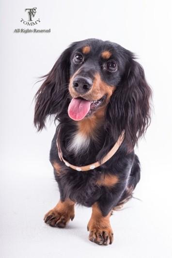 OMN All Rights Resenved,dog,dog like mammal,dog breed,snout,carnivoran