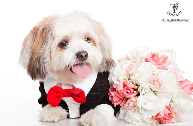 下 MMS All Rights Reserved,dog clothes,dog breed,dog,dog like mammal,puppy