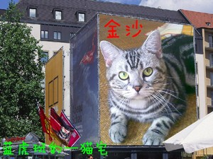 金沙 蓝皮,cat,small to medium sized cats,cat like mammal,fauna,whiskers