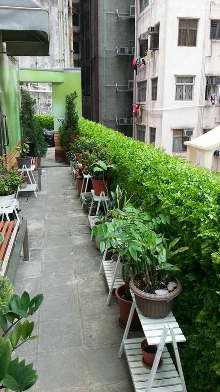 Flowerpot,Plant,Balcony,Flower,Courtyard